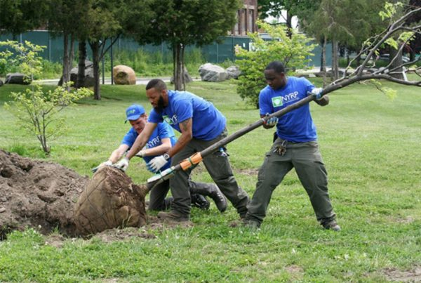 ONE Million Trees Have Been Planted by the New York Restoration Project & We're Celebrating!!