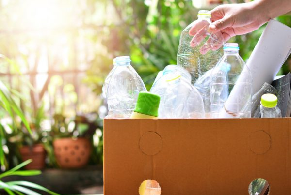 plastic bottles sitting in cardboard box near some plants in the background